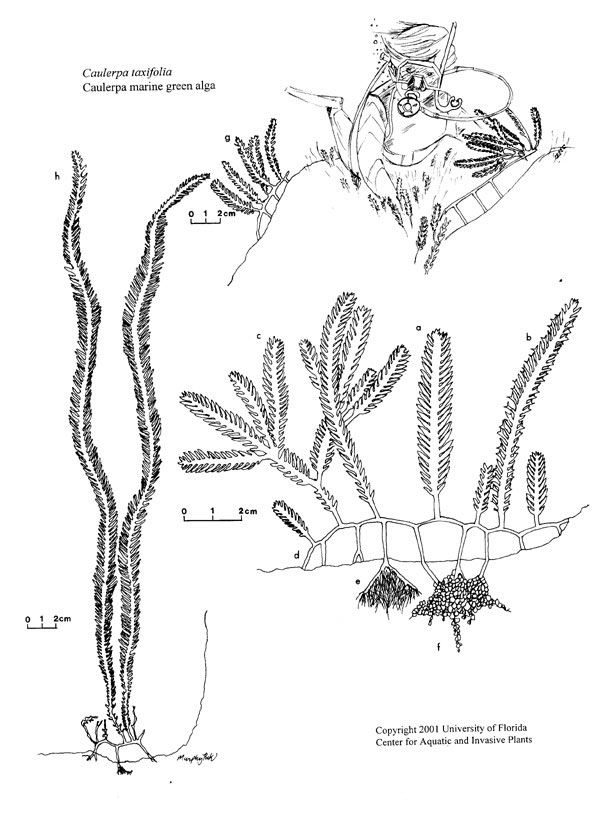 invasive species coloring pages - photo#13