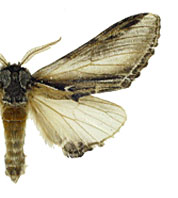 family relationships in the moths and Provides information on de facto relationships and what disputes between people who were in de facto relationships can be settled by the family court.