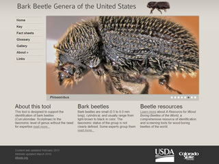 Bark Beetle Genera of the United States: Phloeotribus Fact Sheet