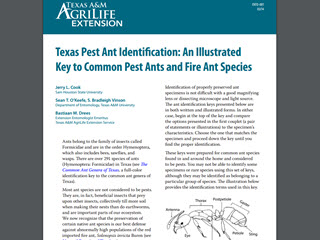 Texas Pest Ant Identification: An Illustrated Key to Common Pest Ants and Fire Ants