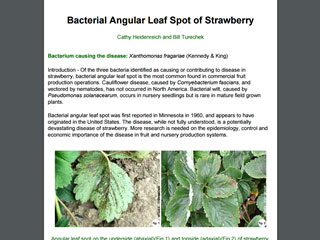 Bacterial Angular Leaf Spot of Strawberry