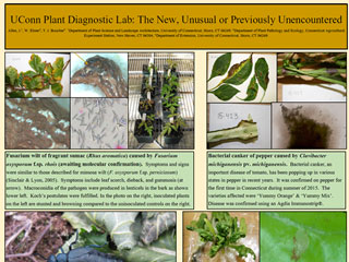 UConn Plant Diagnostic Lab: The New, Unusual or Previously Unencountered