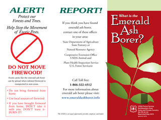 What is the Emerald Ash Borer?