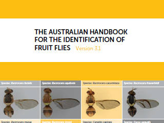 The Australian Handbook                              					for the Identification of Fruit Flies - Version 3.1