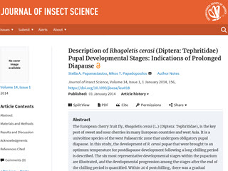 Description of Rhagoletis cerasi                              					(Diptera: Tehpritidae) Pupal Developmental Stages: Indications of Prolonged Diapause