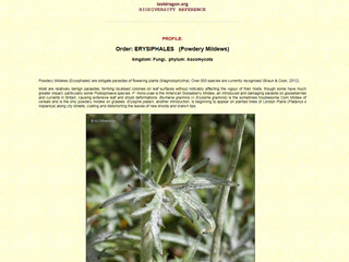 Biodiversity Reference: Erysiphales (Powdery Mildews)