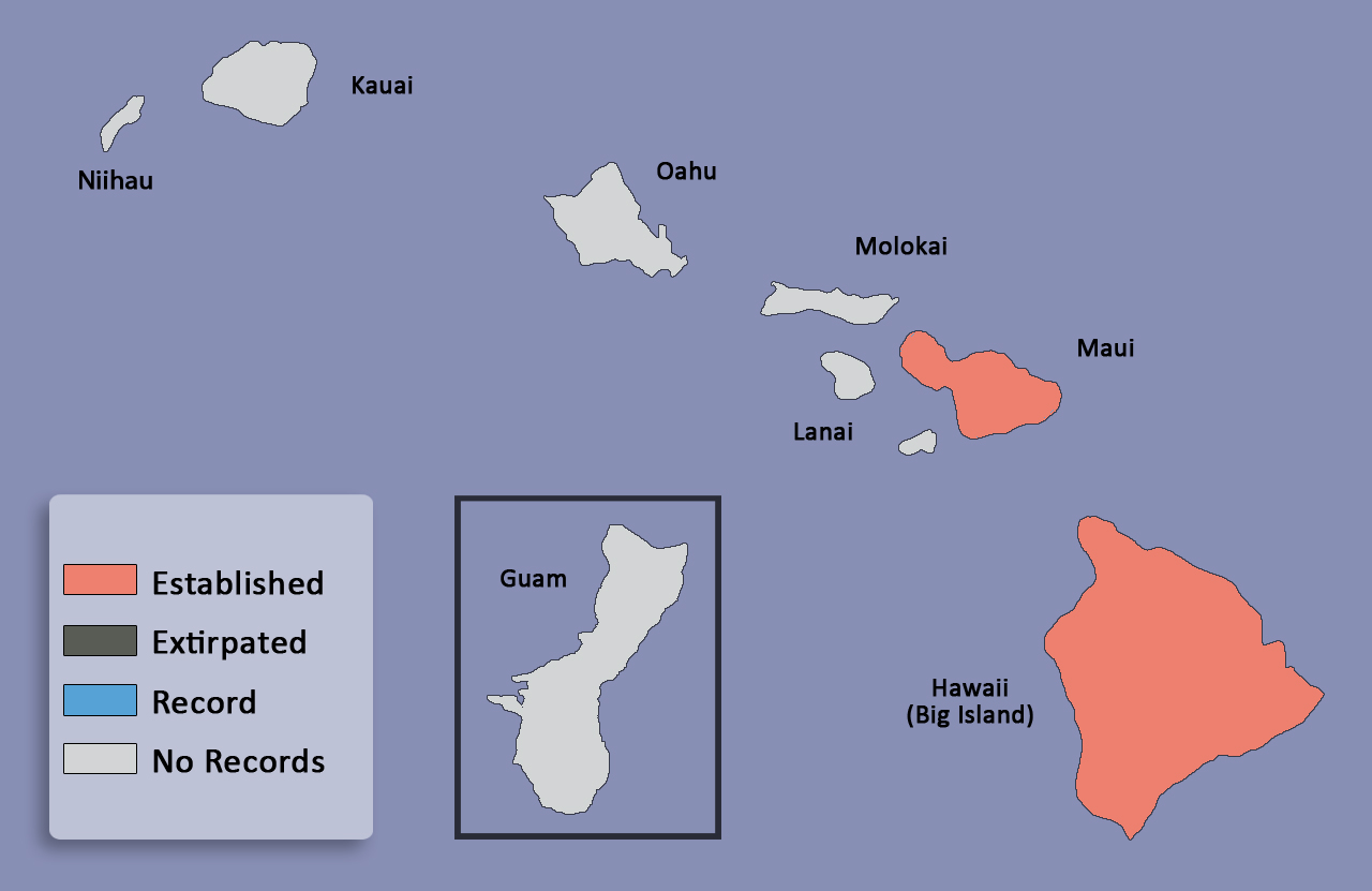 Canthon humectus hawaiian scarab id distribution map for canthon humectus gumiabroncs Choice Image