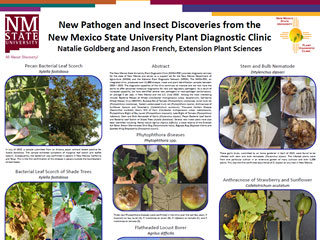 New Pathogen and Insect Discoveries from the New Mexico State University Plant Diagnostic Clinic