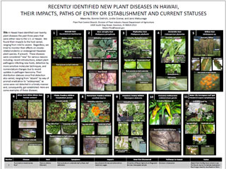 Recently Identified New Plant Diseases in Hawaii, Their Impacts, Paths of Entry or Establishment and Current Statuses