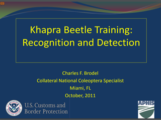 Khapra Beetle Training: Recognition and Detection