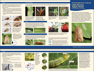 Field Identification Guide for Light Brown Apple Moth in California Nurseries