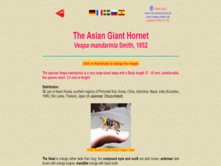 The Asian Giant Hornet: Vespa mandarinia Smith, 1852