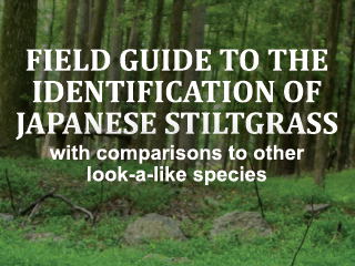 Field Guide to the Identification of Japanese Stiltgrass with Comparisons to Other Look-a-like Species